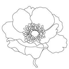 Monochrome Hand drawn poppy, anemone flowers. Vector.