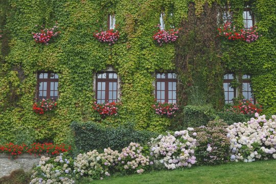 Rochefort-en-terre, Brittany, France. A wall of a building completely covered by ivy