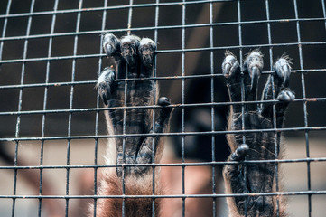 Primate hands gripping on cage