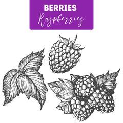 Raspberry hand drawn vector illustration set. Engraved food image