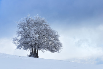 Italy, umbria, Perugia district, Castelluccio di Norcia - Frozen tree