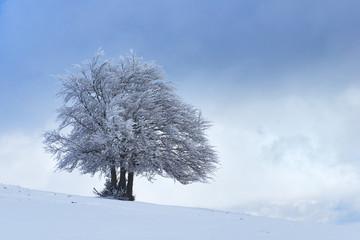 Italy, umbria, Perugia district, Castelluccio di Norcia - Frozen tree