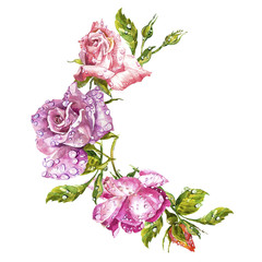 Watercolor painting Greeting cards. Rose background, watercolor composition. Flower backdrop. Isolated illustration on white background.