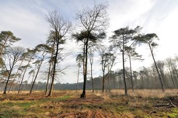 La forêt de Saint-Amand-les-Eaux après une tempête