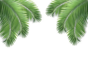 Palm leaf isolated