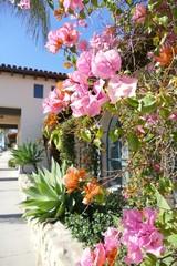 Drillingsblume, Bouganvilla, Frühling und Blumen