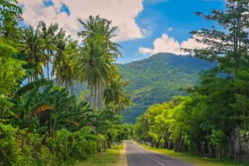 Road Through Jungle