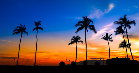 Wall Mural - blue orange sunset with palm trees