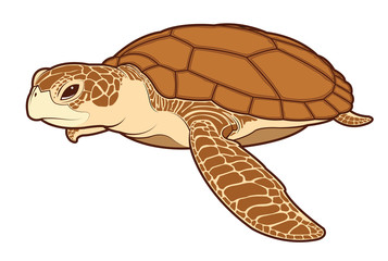 sea turtle color vector