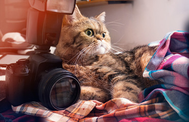 The cat lies in the hipster plaid shirts with the camera, photographer.