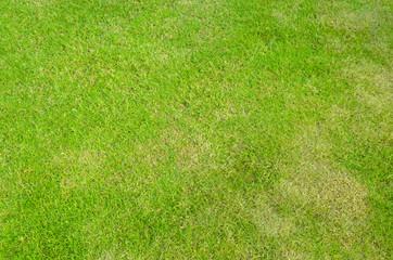 Green grass of golf field