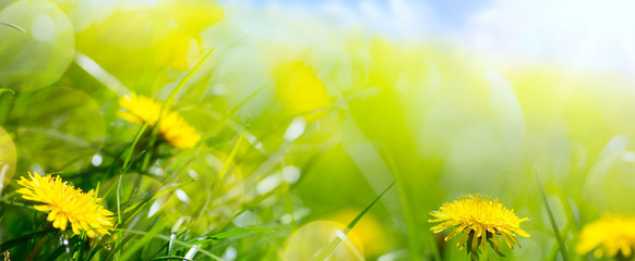 Fototapete - art abstract floral spring or summer background with fresh grass and spring flower