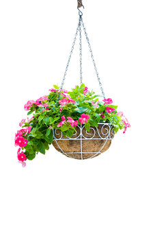 Pink flower pot hanging isolation on white background