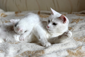 Cute kitten and mother
