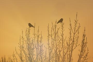 Vögel im Morgenlicht