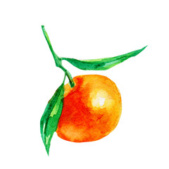 Mandarin illustration. Hand drawn watercolor on white background.