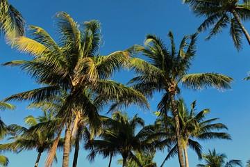 South Beach Florida Palm Trees Background