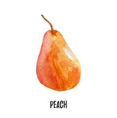 pear illustration. Hand drawn watercolor on white background.