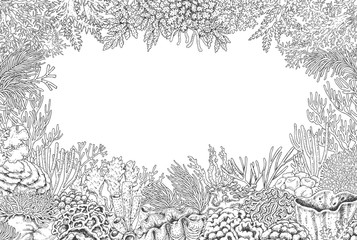 Underwater Background with Corals