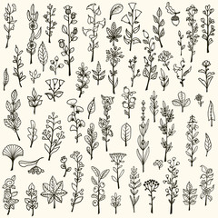 Collection of handdrawn vector doodle herbs and flowers