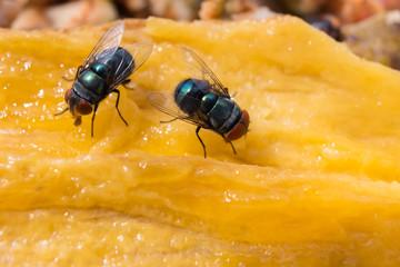 Two flies on an orange background