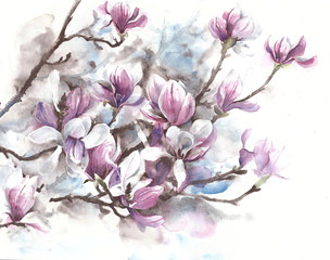 Magnolia flowers blooming spring blossom magnolia tree watercolor painting