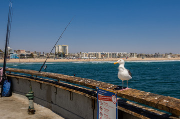 seagull on the Venice Pier Los Angeles