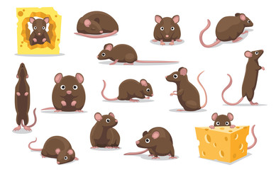 Cute Brown Rat Various Poses Cartoon Illustration
