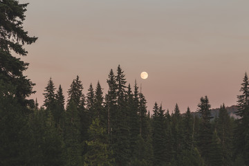 Full Moon Over Forest Trees