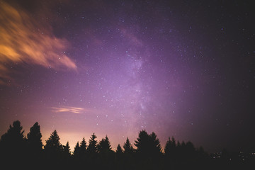 Milky Way Above Forest Trees