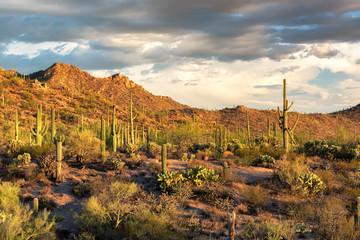 Foto op Aluminium Saguaro cactus landscape in Saguaro National Park, Arizona.