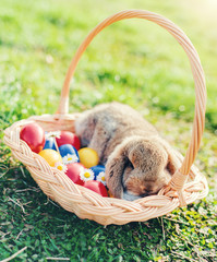 Colorful Easter eggs and bunny in the basket
