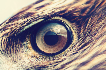 eagle eye close-up