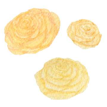 Hand drawn watercolor vintage yellow roses isolated on the white background