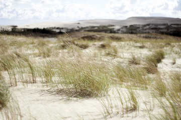 Dead Dunes with Grass