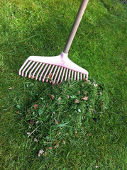A heap of cut grass is raked up with a pink plastic rake in the garden.