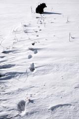 Dog_in_snow