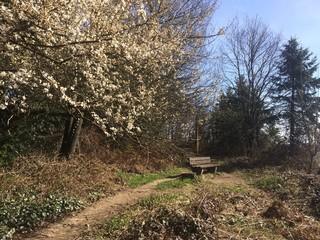 Naturlandschaft im Frühling mit Bank