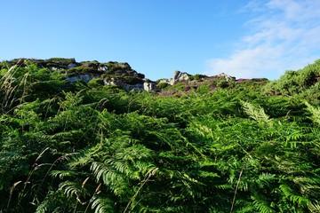 Irlands Natur und Blumen