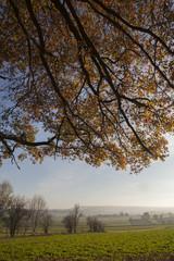 Landscapes in Limburg Nethelands