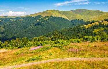 meadow with purple flowers in Carpathian mountains in summer