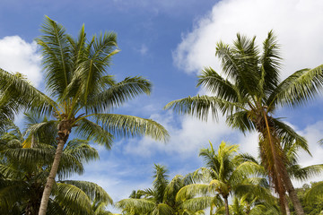Tropical palm trees, travel background