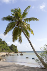 Tropical palm tree, travel background