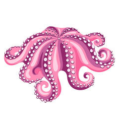 Octopus. Isolated illustration of seafood on white background