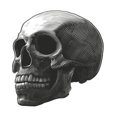 Human skull in woodcut style