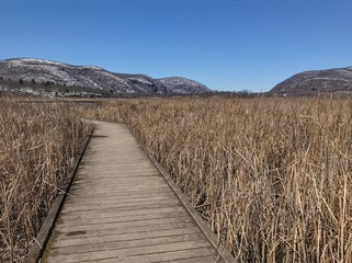 boardwalk through marshlands