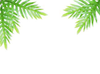Fern leaf isolated