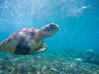 Turtle swimming underwater