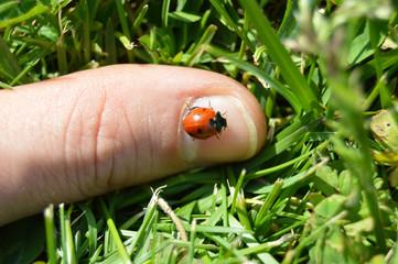 Ladybug on finger