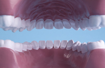 Tooth model inside of mouth